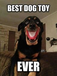 Best Dog Ever Meme
