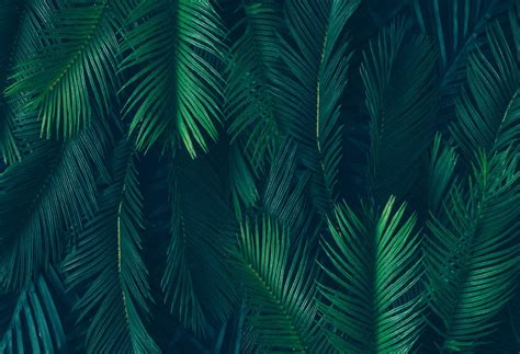 Abstract Green Leaf Wallpaper by 7x5ft Tropical Green Leaves Palm Tree Custom Photo