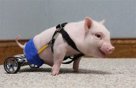 cool funpedia injured animals keep moving