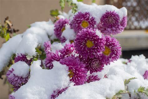plante exterieur d hiver photo de fleur une pensee