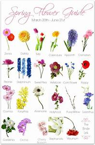 Information about spring flower names and pictures yousensefo different types of flowers with names chart imgkid mightylinksfo