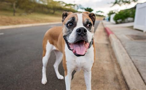 affordable dog food  bestdogfoodcom