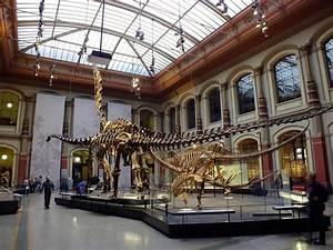 Reiseführer Für Berlin : museum f r naturkunde museum of natural sciences ~ Jslefanu.com Haus und Dekorationen