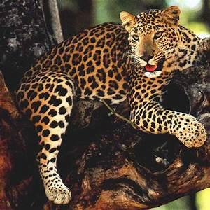 Jaguar Rouen : le monde des animaux ~ Gottalentnigeria.com Avis de Voitures