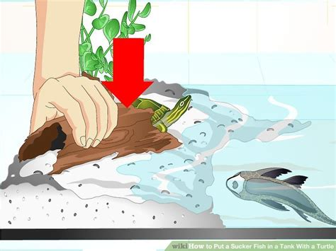 how to keep turtle tank clean how to put a sucker fish in a tank with a turtle 15 steps
