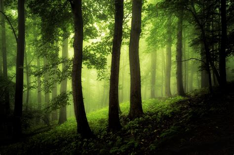 green fog  forest    forest photography