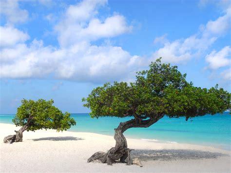natuur op de nederlandse antillen vakantie op de abc eilanden