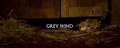 Wind Grey Direwolf Fanatic Tv