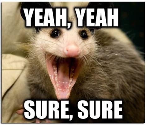 Yeah Sure Meme - meme creator possum meme generator at memecreator org