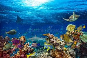 Underwater Coral Reef Landscape Stock Photo