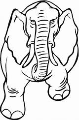 Elephant Coloring Pages Trunk Template Drawing Animal Angry Animals Outline Asian Draw Clipartmag Simple Getcoloringpages sketch template