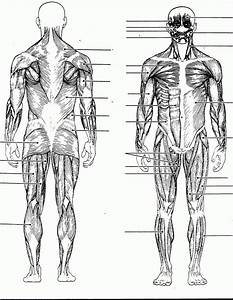 the muscular system coloring pages coloring home With installationdiagram