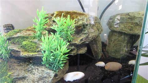 poisson amazonien d aquarium incroyable aquarium amazonien poisson