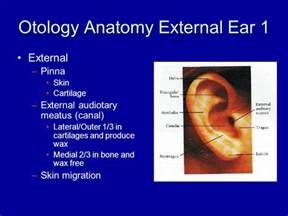 External Ear Canal Anatomy