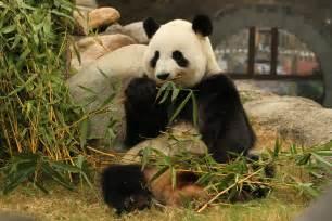 Ocean Park Hong Kong Amazing Asian Animals