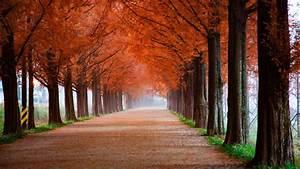 Autumn, Park, Scenery, 5k, Wallpapers
