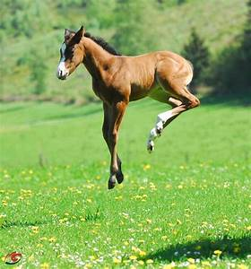 238 best images about Horses 11 on Pinterest | Arabian ...