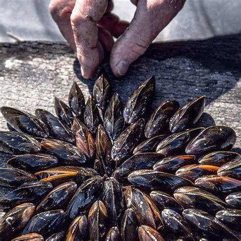 recettes de julie andrieu cuisine eclade de moules julie andrieu