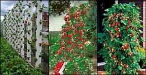Erdbeeren Im Rohr Bauanleitung : wie erdbeeren im rohr wachsen ~ Orissabook.com Haus und Dekorationen