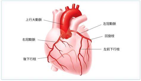 心臓の構造