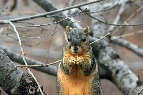 10 interesting ways to keep squirrels out of your bird