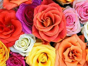 30 beautiful flower wallpapers the wow style