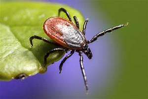 Insectos que pican y arácnidos Rentokil