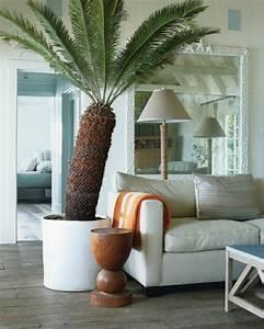 Große Pflanzen Fürs Wohnzimmer : zimmerpalmen bilder welche sind die typischen palmen arten ~ Michelbontemps.com Haus und Dekorationen