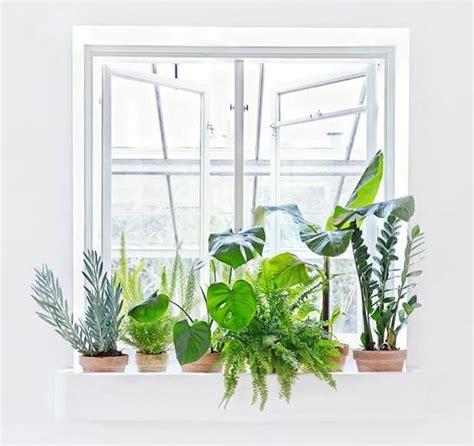 plante depolluante d interieur les 25 meilleures id 233 es concernant plantes d 233 polluantes sur plante interieur ombre