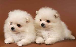 Cute Puppy Pictures Wallpapers - Wallpaper Cave