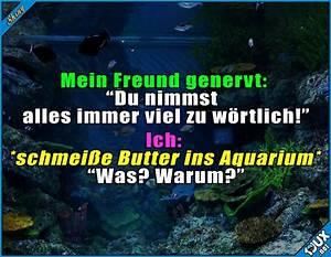 Fische Aquarium Hamburg : die 25 besten ideen zu fisch humor auf pinterest ~ Lizthompson.info Haus und Dekorationen