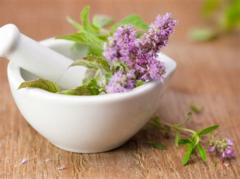 herbal medicine medical herbs dr weils wellness
