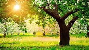 spring, , sun, , nature, , trees, , apple, trees, , dandelions