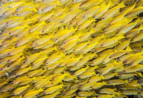 fish  fish common characteristics  fishes