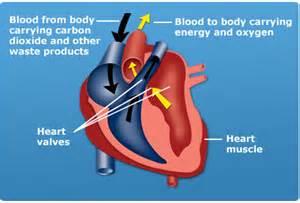 Dog Heart Murmur