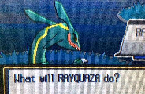 learn to fly mega rayquaza trevenant accelgor speed