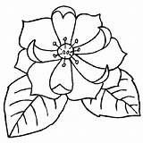 Magnolia Flower Coloring Pages Flowers Magnolias Dessin Sheets Power Google Printable Getcolorings Jungle Colors Recherche Draw sketch template