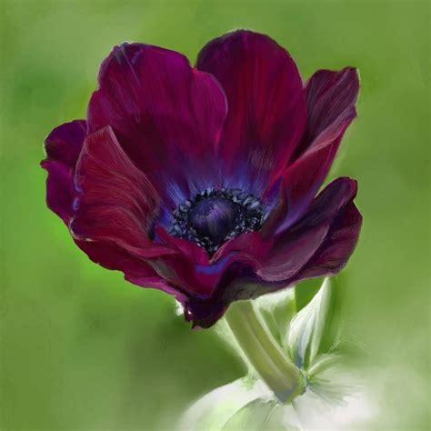 anemone flower digital painting ashley cameron