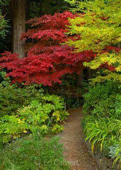 Asian Gardens Grass Valley by Hakonechloa Grass And Japanese Painted Fern Beside A