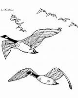 Coloring Goose Geese Snow Flying Drawing Sound Line Wild Printable Coloringbase Birds Landing Journal Coloringpages4kids sketch template