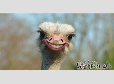 Lustiges Gesicht Bild lustichde