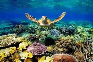Great Barrier Reef Turtle Wallpaper - Free HD Download
