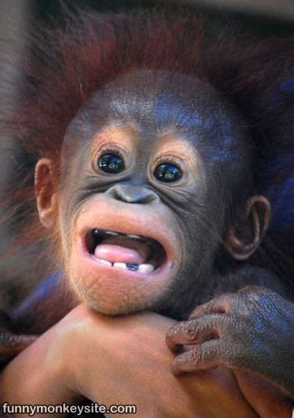 cute monkey face funny monkey pictures