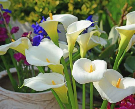 Wedding lilies   Articles   Easy Weddings