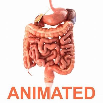 Digestive System 3d Animated Human Anatomy Animation