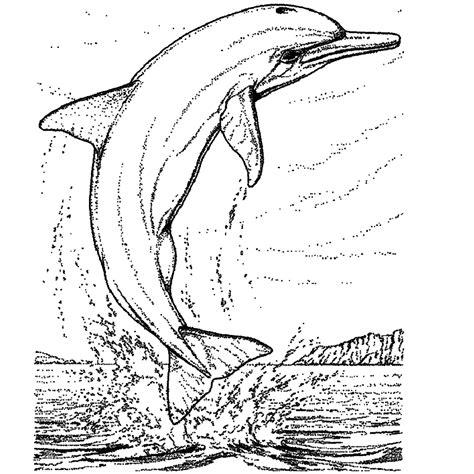 Kleurplaten Dieren Dolfijnen by Leuk Voor Dolfijnen 0006