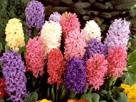 tips on how to flower bulbs to bloom interior