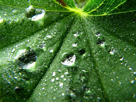 Water Drops on Leaf 3D Pic | HD Wallpapers