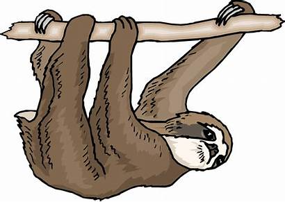 Sloth Clipart Rainforest Clip Toed Three Cliparts