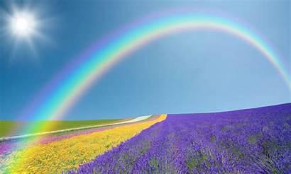 Wallpapers Screensavers Rainbow Flowers Yellow Lavender Field